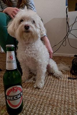 Henry loves German beer