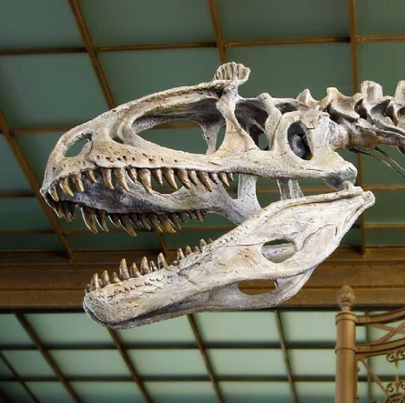 dinosaur museum Brussels