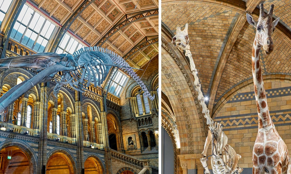 This image has an empty alt attribute; its file name is london-travel-natural-history-museum.jpg